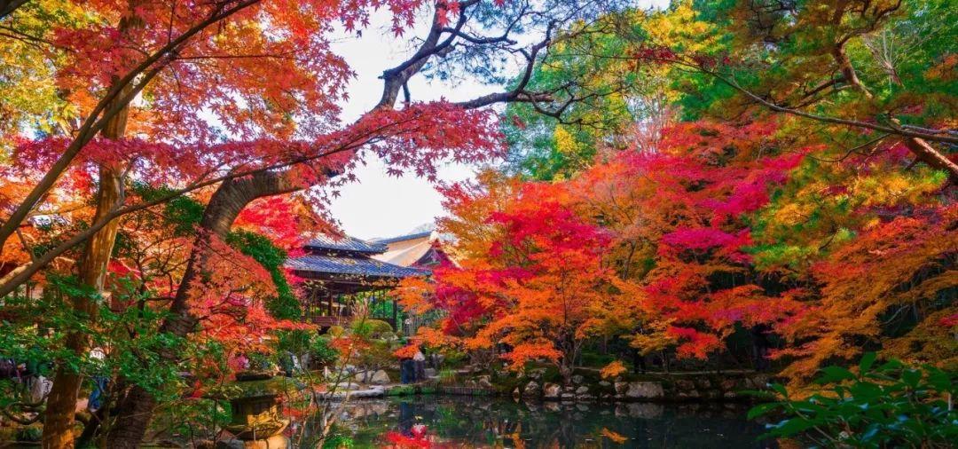 2019第一波枫叶前线来了!今年日本最美的枫叶去哪里看?