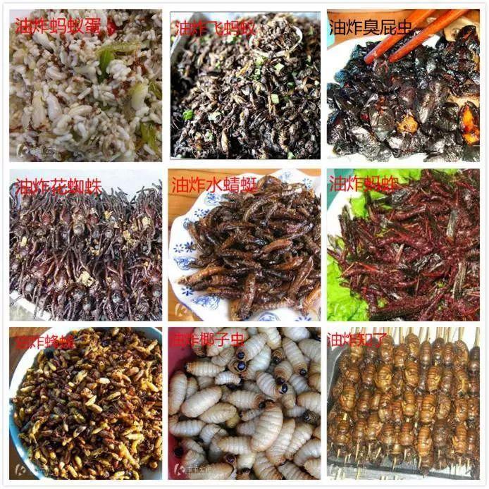 蛋白质危机下,吃昆虫成了新的食尚?