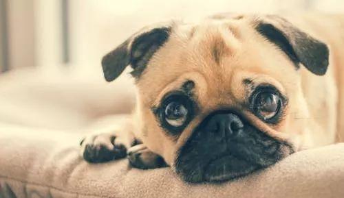 狗狗拉肚子并非都是肠胃疾病,天气和压力都有可能会影响!