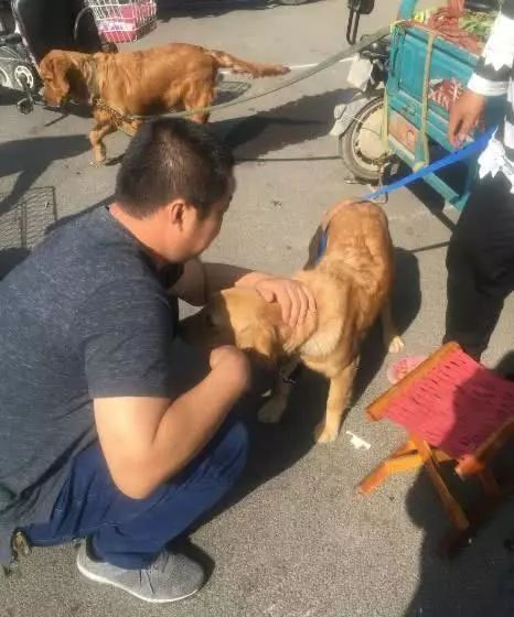 女主人怀孕决定卖掉养了2年的金毛,狗狗一个举动让买家都动容了