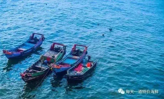 震惊~东山岛野生海鲜竟可以全国配送上门-人均只要50元