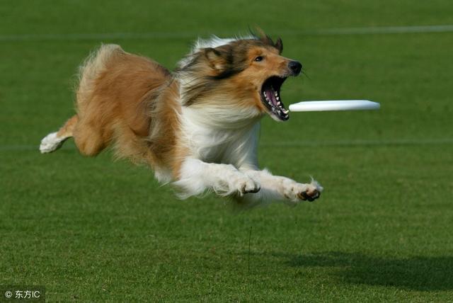 适合带狗去玩的、可以带狗去玩的、可以带宠物去玩、带宠物去旅行