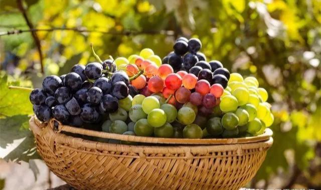 它是立秋之后最建议你吃的水果,增食欲强免疫,别说我没告诉你