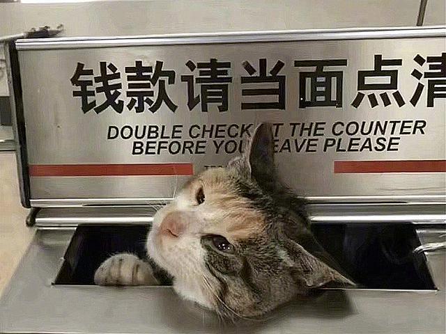 求撸丝片种子_原创 流浪猫强钻银行窗口求卖萌:您要撸猫服务吗?不好不要小鱼干