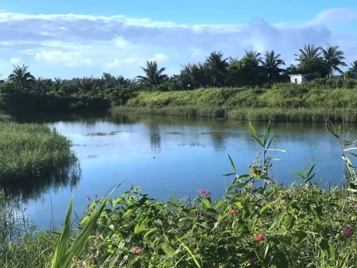 海口三江红树林湿地公园详规通过审议 未来将打造成这样