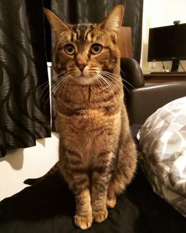 猫咪前往养老院探访前主人,它的反应让所有人觉得好甜蜜!