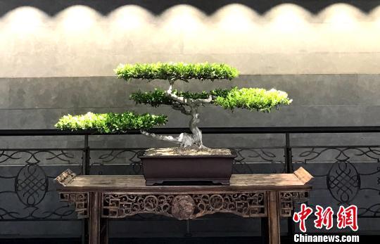 """<b>""""扬派盆景""""技艺薪火相传 六名传人拜师</b>"""