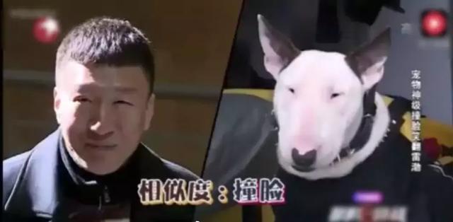 《小欢喜》黄磊隔空cue孙红雷像牛头梗,撞脸动物明星有哪些?