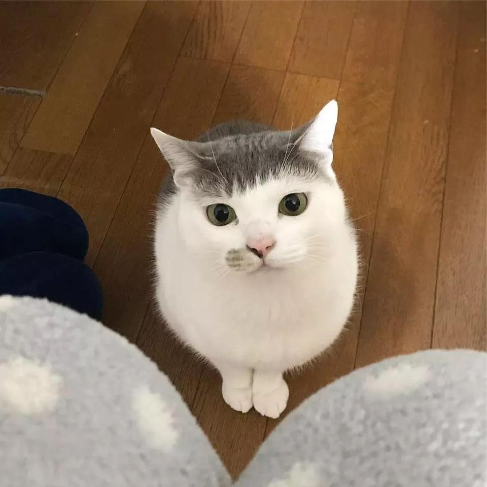 为什么一只猫剪齐刘海会这么好看?图片