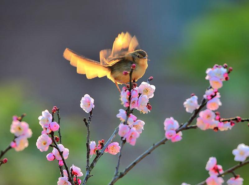 读一首诗李商隐《流莺》,苦痛追寻虚幻的希望