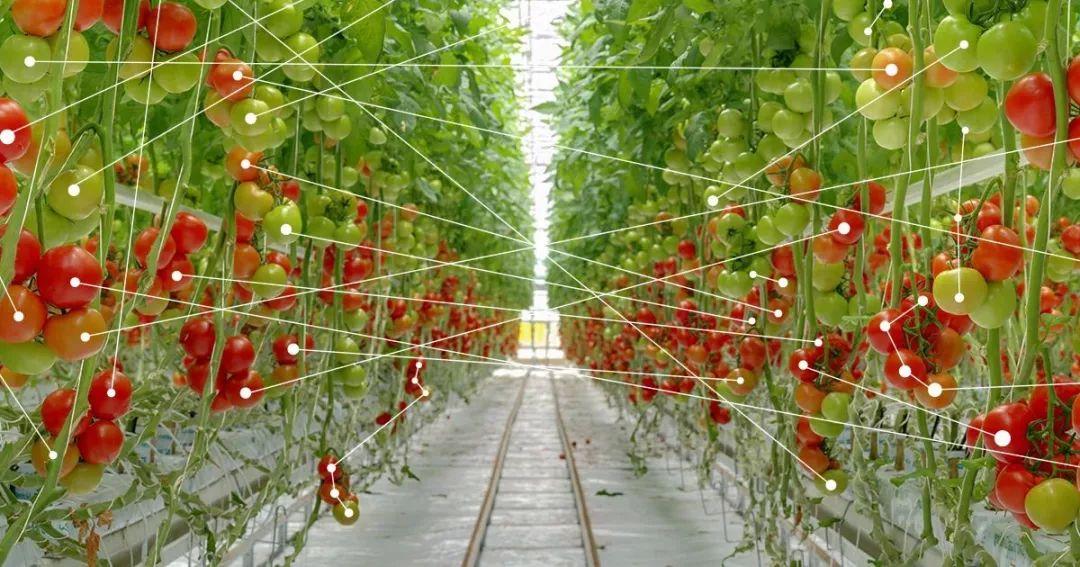 人工智能,对农业都有哪些影响