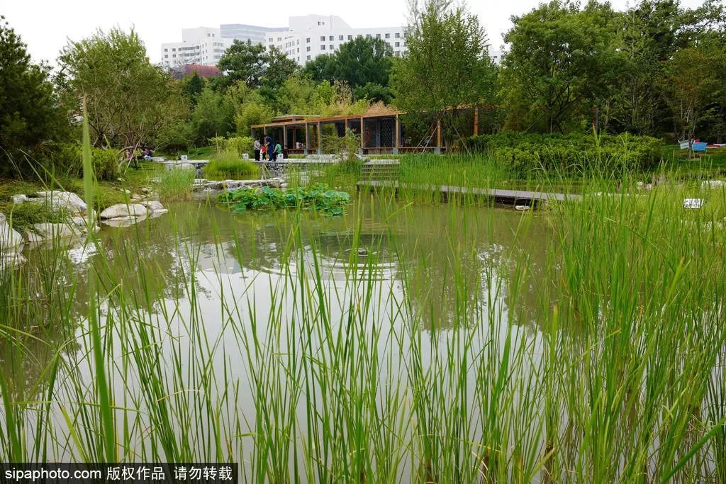 北京首个家门口的湿地公园!山涧小溪,芦苇荷花