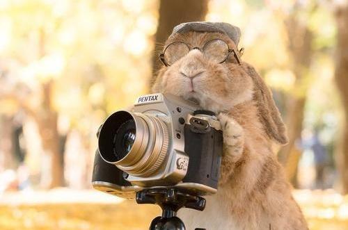 兔子毛球吐出来好么,兔子毛球吐出来就好了么