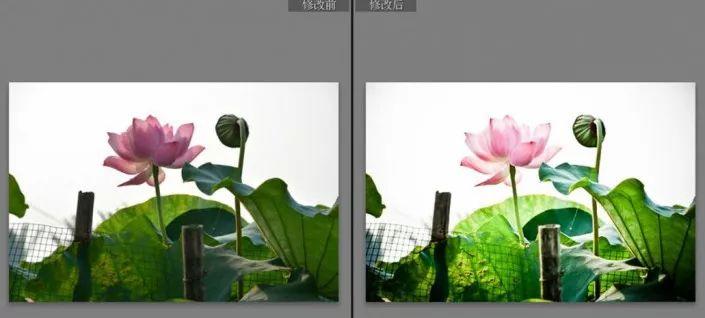 具有ps和lr把普通数码荷花照片v数码成通过中国风的古典照片田园风光平面六合无绝对片