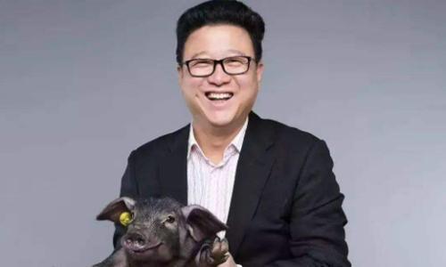 """网曝阿里收购网易考拉,丁磊继续""""养猪"""",拼多多只能干着急"""