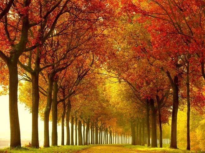 【 品 鉴 】 世界最美的树景
