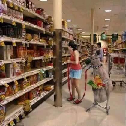 搞笑GIF:妹子的宠物够霸气的,出门都不需要挎包了吧