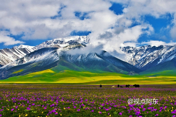 新疆博州载歌载舞走西安,赛里木湖风光让游客迷恋