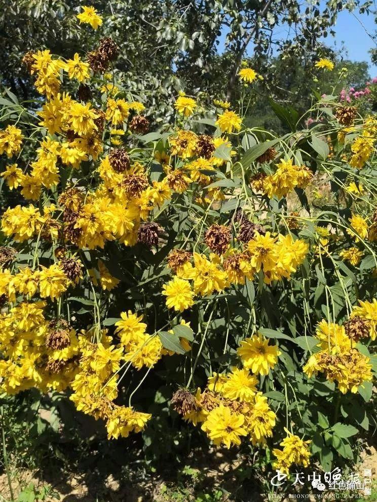 黄石头村,一个开满鲜花的村庄