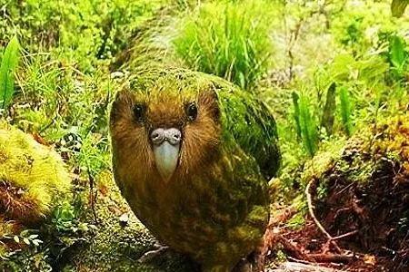【奇闻轶事】天下上最年夜的鹦鹉个个皆是身价没有菲
