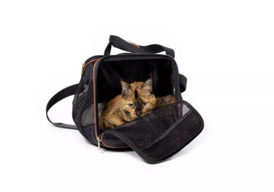 网红太空猫包,又双叒叕闷死猫了