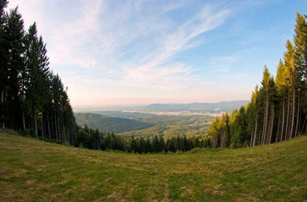 森林康养?!德国黑森林为什么成为全球著名的康养胜地呢?