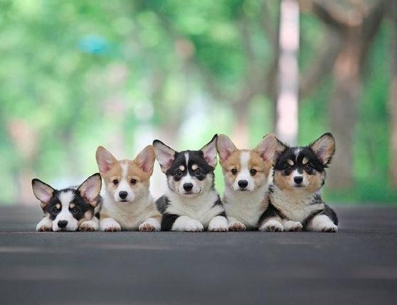唐国强,段子,村民,妹子,儿子,废话,头发,弟弟,那好,笑话,搞笑段子,唐国强,小明,妹子,宠物狗店,村民