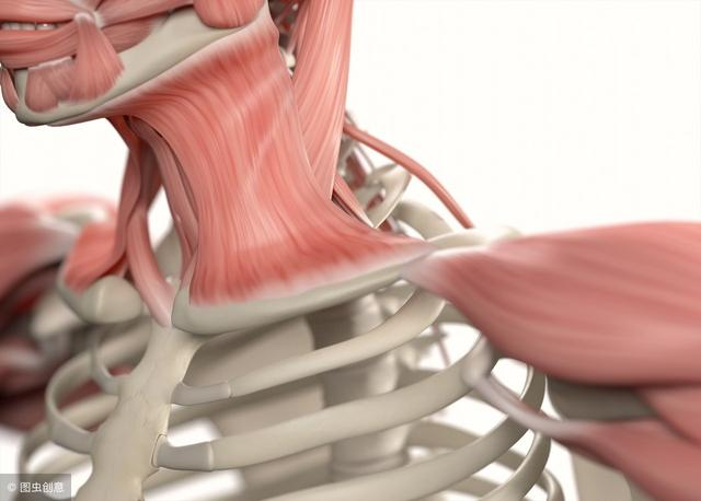 专业运动康复师说:撸铁中的这4点,可能毁了你的肩关节