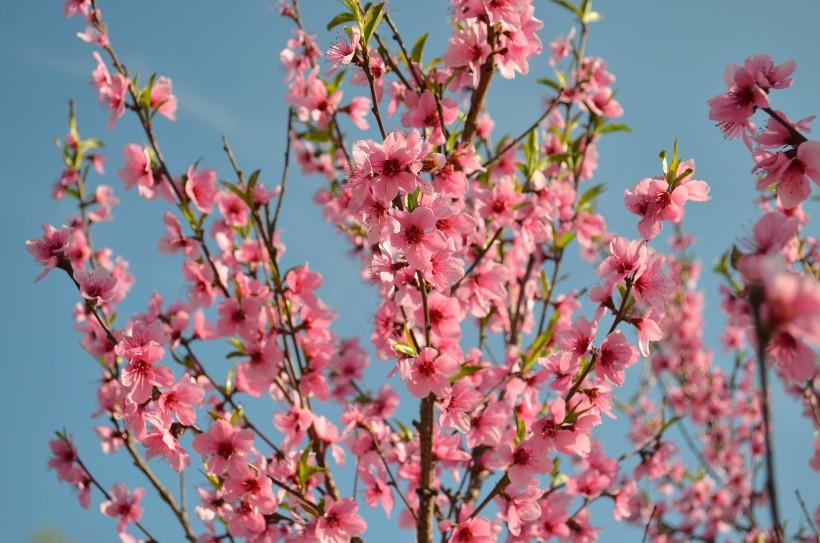 中秋节前后身边大机遇出现,桃花不断,横财不停的属相