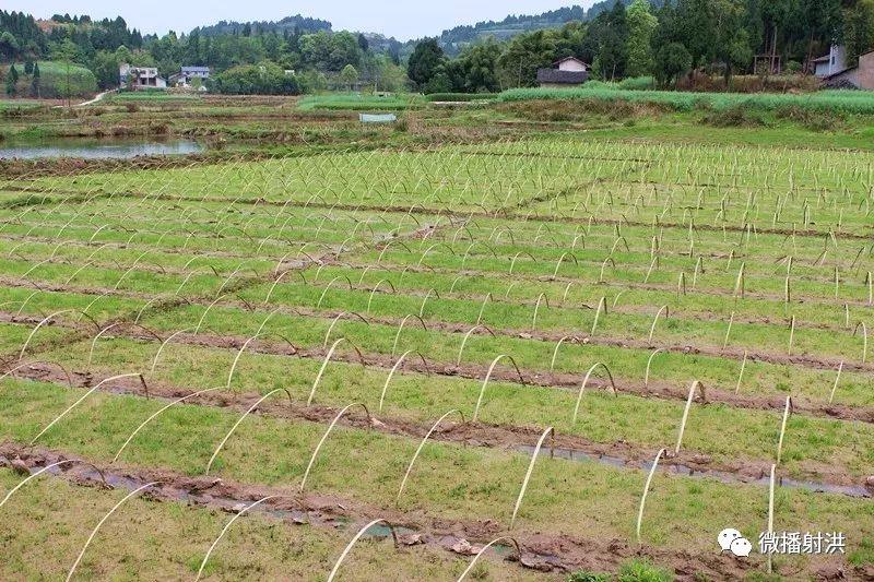 射洪2019年度高标准农田建设实施方案获通过  涉及这些乡镇!