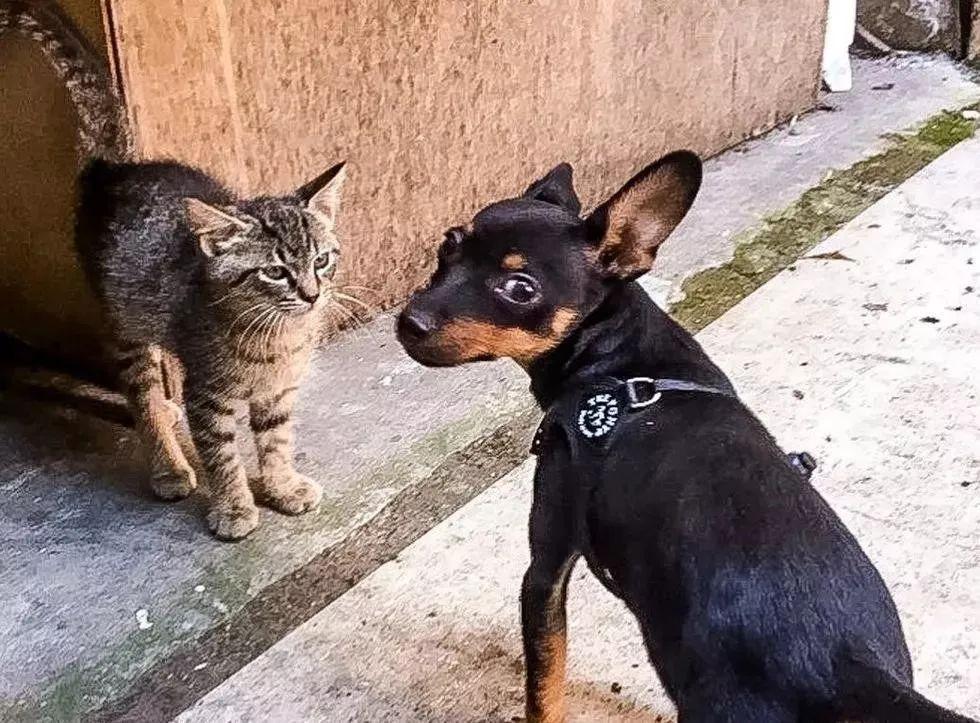 主人遛狗却被流浪猫盯上,天天去家门口蹲守:朕就要跟你玩!