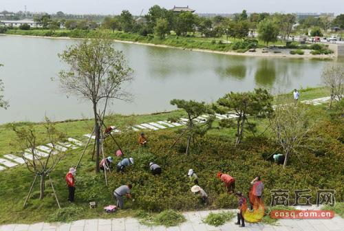 园林工人进行除草养护作业