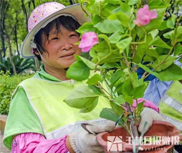 """最近,玉林街头广种""""市花""""三角梅,就在这些地方"""