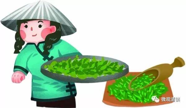 清镇市中华茶博园: 采茶 土地流转 农户挣