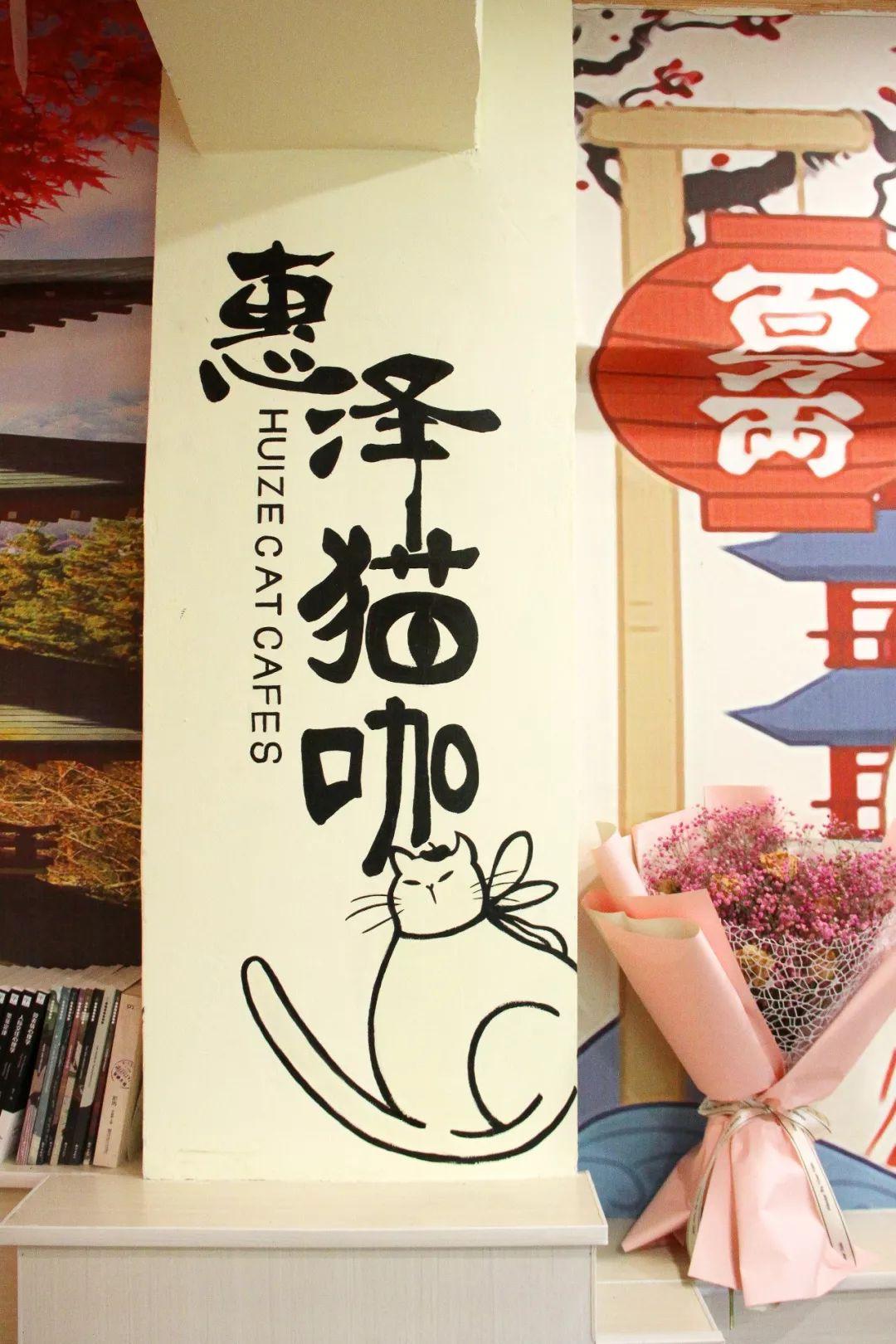 日日射偷偷撸_打卡阳泉这家猫咖,撸猫,拍照,美食一次搞定!