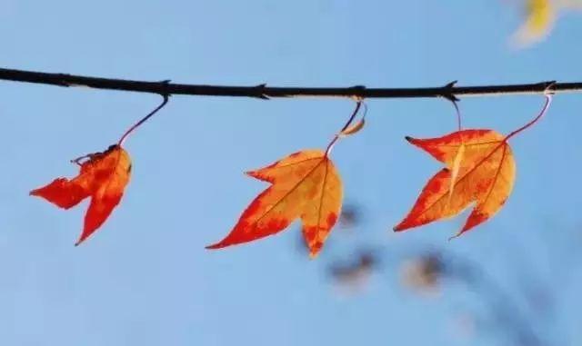 飘摇着萧瑟; 一滴秋露,一缕秋风, 来年不再盛开; 慢慢热或者渐渐冷