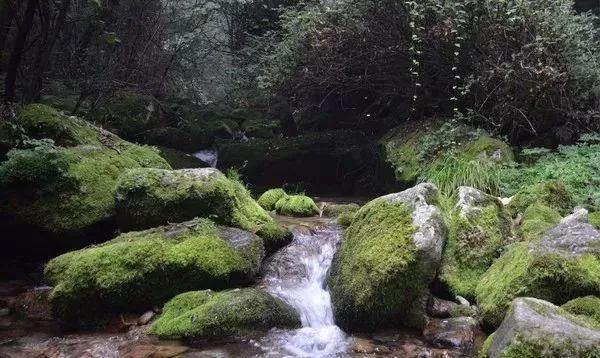 太白山的苔藓 | 默默无闻 多姿多彩