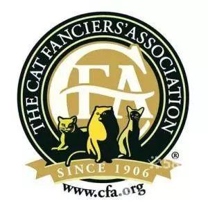 一分钟,带你了解什么是CFA