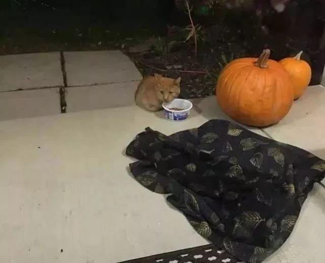 习惯流浪生活的10岁橘猫,却遇到难以解决的问题,不得不主动求助