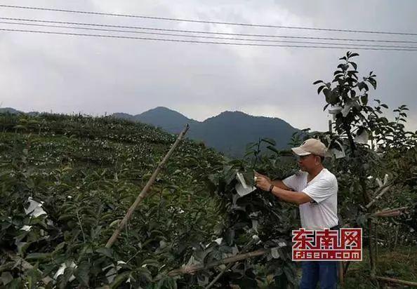 """东南网TV丨看好大陆发展前景 台胞来莆开发""""精致农业"""""""