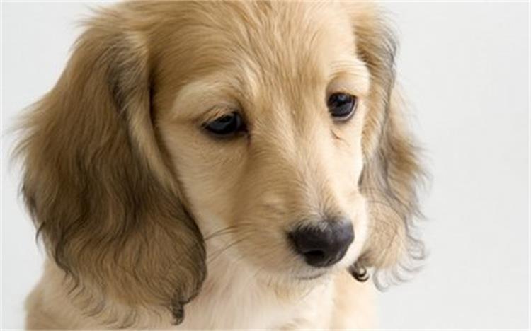 长脸狗_听说狗食盆按脸选?你家狗适合什么类型?_狗狗