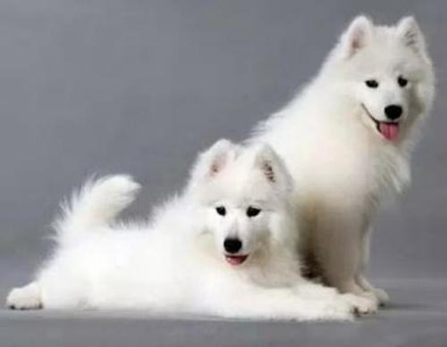 狗主人疑惑:狗狗产后每天喝多少液体钙