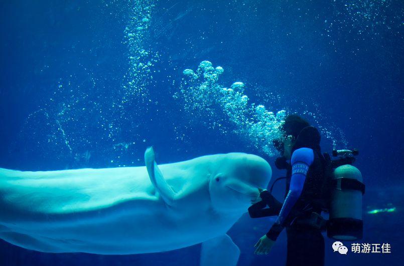 海象海狮科普秀