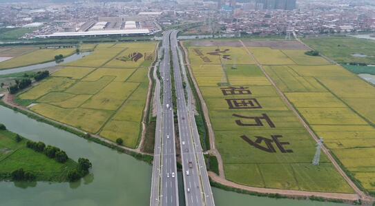 福建晋江:十二项强农惠农政策出台 助推农业产业发展