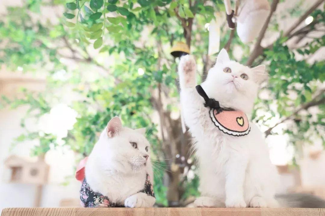 日日射偷偷撸_撸猫的同时也不能闲着,网红奶茶和健康的果汁以及喵与喵寻夏日特别
