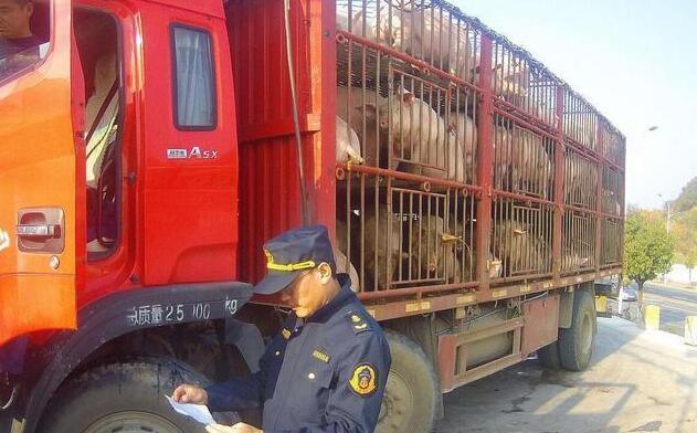 非洲猪瘟蔓延,猪肉身价暴涨,那些没中招的养殖户暴富了吗?