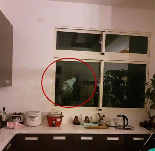 原创            男子半夜去厨房倒水,看见窗外的身影,直接掏出手机