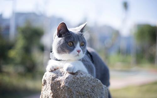 猫咪为什么会得口角炎图片