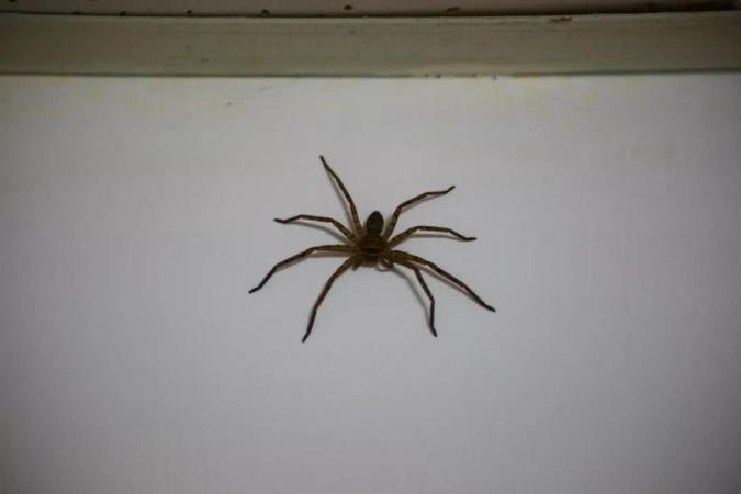 原创            家中出现大蜘蛛,女子淡定叫来4位帮手:还有这种操作?