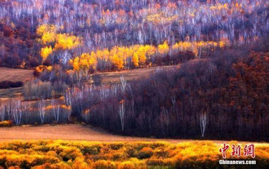 全面停止天然林商业性采伐